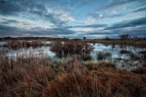 The Swamp by Andirilien