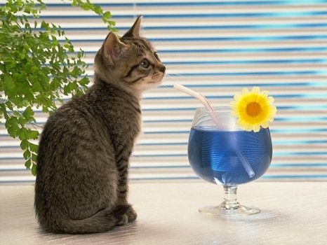 Drinking water by joli-chat