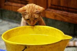 What`s In The Bucket? by courtneytartan