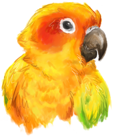 Sun Conure by AmburgurAndFries