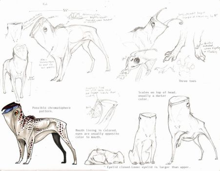 Ket Reference Sketches by Pythosblaze