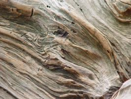 Wood Texture 2 by mellystock