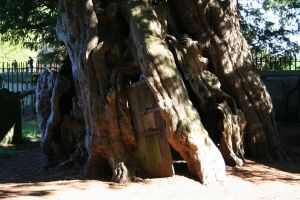 Yew Tree with Door 2 - Stock by OghamMoon