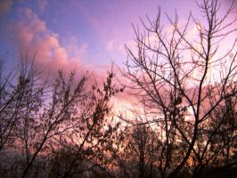 Branches and sky by angelines