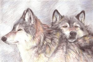 +pack brothers+ by obiewolf