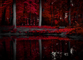 Scarlet Lake II by Nelleke