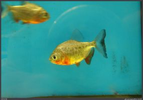 Fish Stock 0053 by phantompanther-stock