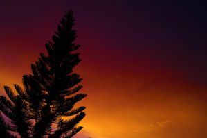 NIght pine by cainoy