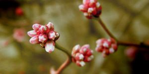 Boo-berry Blooms... by iluvobiwan91