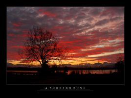 A Burning Bush by Janorien