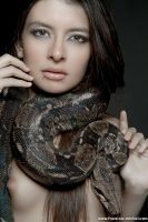 Snakes by Miss-Clara