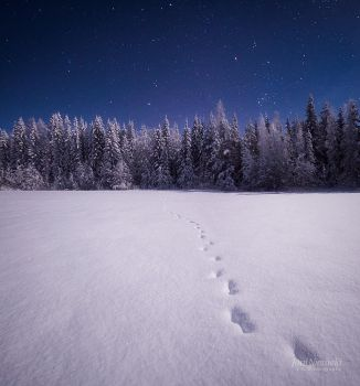 Tracks In The Moonlight by JoniNiemela