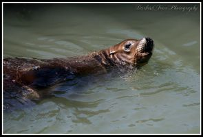 Sea Lion IV by DarkestFear