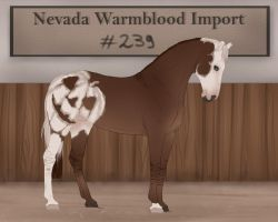 Nevada Warmblood 239 by BRls-love-is-MY-Live