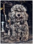 Chapi Dog by zentenophotography