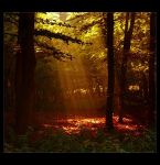Autumn's Heart by Forestina-Fotos
