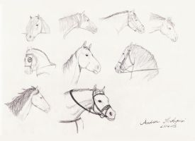 horse heads sketch by AndreaSchepisi