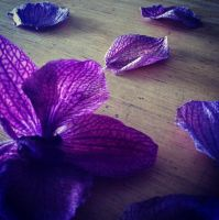 Flower Petals by ThousandEchoes