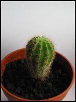 Catus by deathmedic