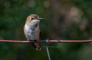 Bird on a wire by kayaksailor