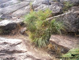 rock with plants (photograph by spark MURALI.K) by sparkmurali