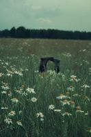 deep in a field.. by alleri