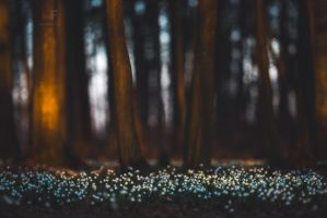 Spring Forest by mescamesh