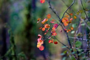 Autumn colors by BIREL