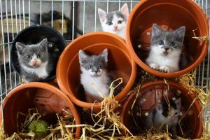 Kittens in Pots by writerELEASE