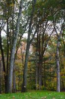 White Mountains  Fall Foliage  201 by FairieGoodMother