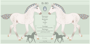 8113 Nordanner Foal by SWC-arpg