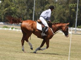 STOCK Showjumping 397 by aussiegal7
