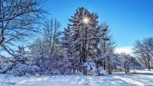 The sun, the snow and the trees by Nini1965