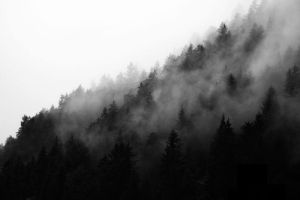 Mourning forest by Malleni