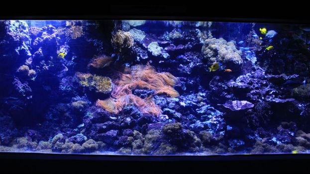 Corals 01 by Pagan-Stock