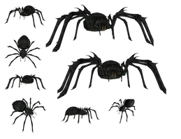 Spider by Astralview
