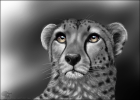 Cheetah Portrait by Nioell