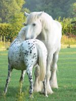2 white horses by LucAtThis