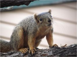 squirrel-serial-5-What do you say? by sonafoitova
