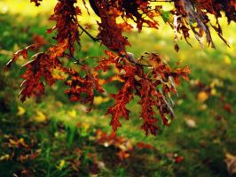 Autumn Embers by Ancient-Hoofbeats
