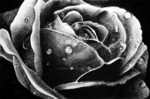charcoal rose by yokisu