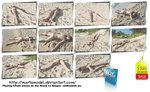 Crime Scenes on the beach - 11 pics for US 3 by MartaModel