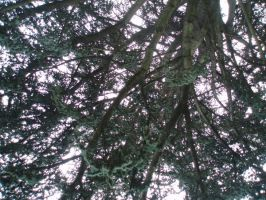 tree top by Lady-Leviathan104-24