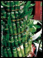Bamboo by paperplay