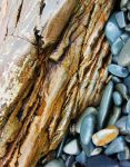 Rocks on Carrick beach by BlonderMoment