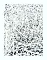 iPhoneography, Weeds by Gerald-Bostock