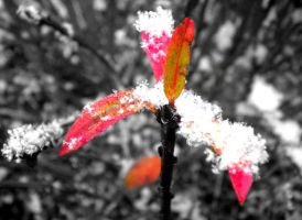 Snowy plant by musicismylife2010