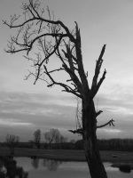 Death of a tree by Angel-Ronin