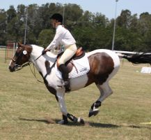 STOCK Showjumping 395 by aussiegal7