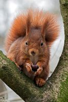 This is my chestnut, you'll not steal my food! by Seb-Photos